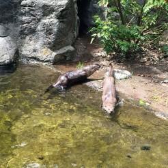 High Desert Otters