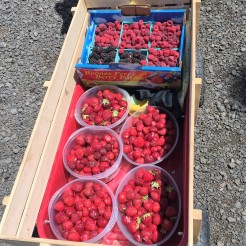 Wagon full of berries